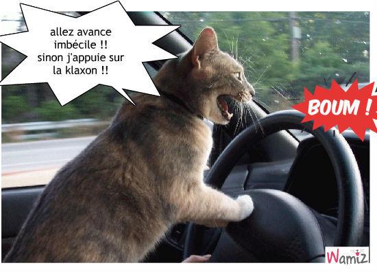 chat dan les bonchons, lolcats réalisé sur Wamiz
