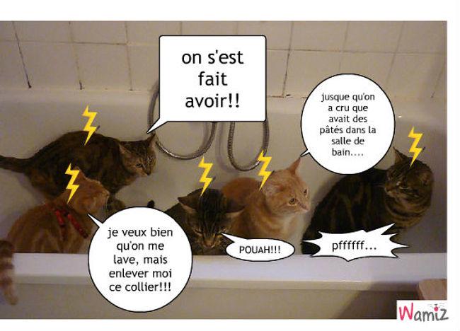 chat dans la baignoire, lolcats réalisé sur Wamiz