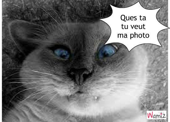 Snap cachecache tooniz bande dessin e bd et photo - Chaton marrant ...