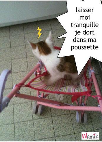 chat en colère , lolcats réalisé sur Wamiz