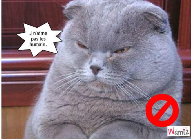 Chat en colère, lolcats réalisé sur Wamiz