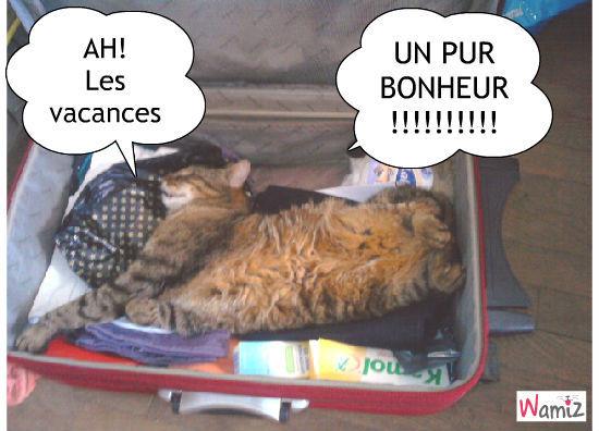 """Résultat de recherche d'images pour """"chat en vacances humour"""""""