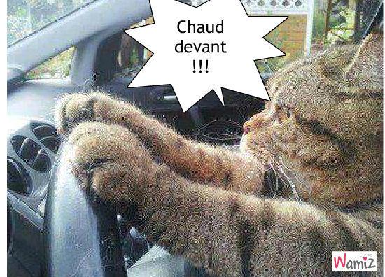 chat en voiture, lolcats réalisé sur Wamiz