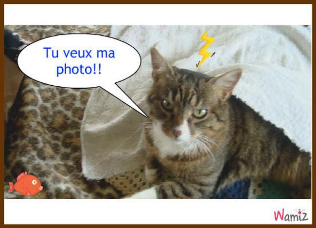 chat enervant :(, lolcats réalisé sur Wamiz
