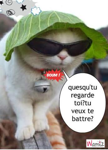 chat énerver , lolcats réalisé sur Wamiz