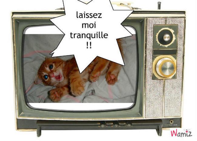 chat enragé, lolcats réalisé sur Wamiz