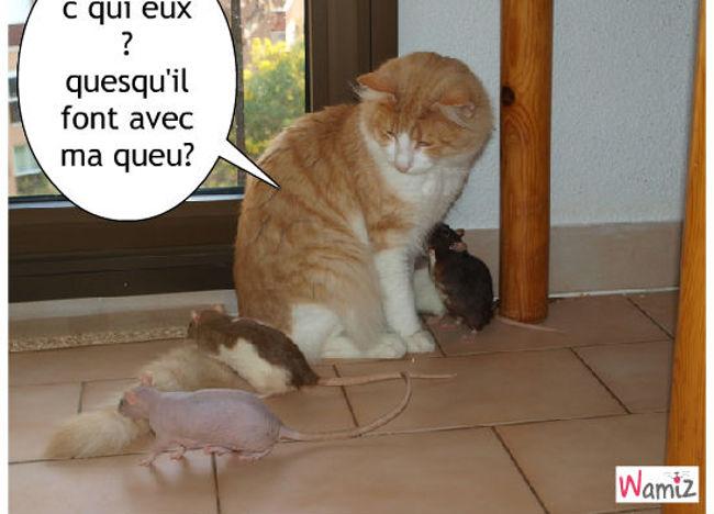 chat et rat, lolcats réalisé sur Wamiz