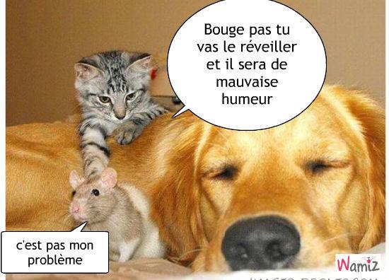 Tooniz De Un Amour Lion Bande Dessin E Bd Et Photo