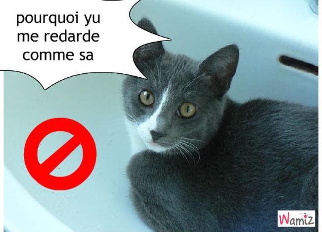 chat facher, lolcats réalisé sur Wamiz