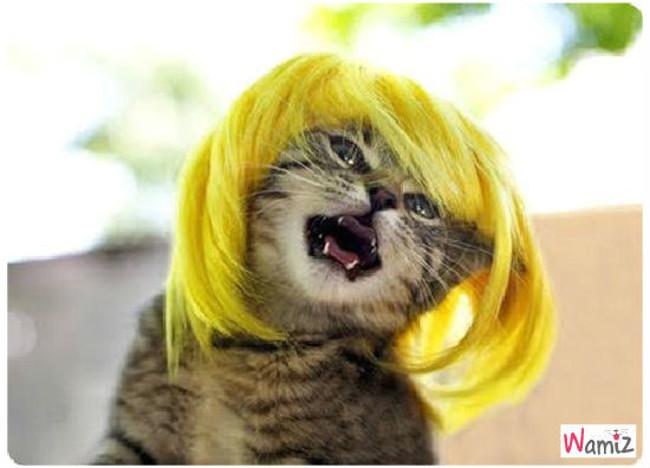 chat fou, lolcats réalisé sur Wamiz