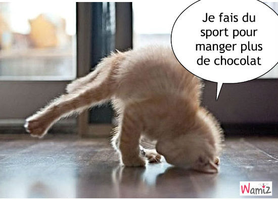 chat-gourmand-79564