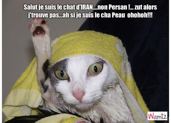 Chat humoristique! : T...