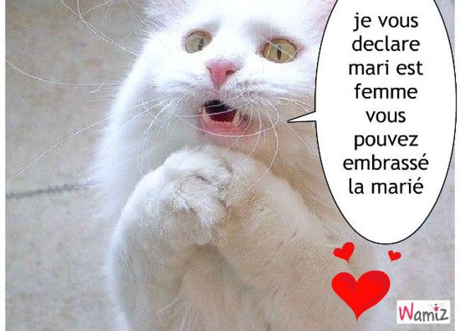 chat mariage, lolcats réalisé sur Wamiz