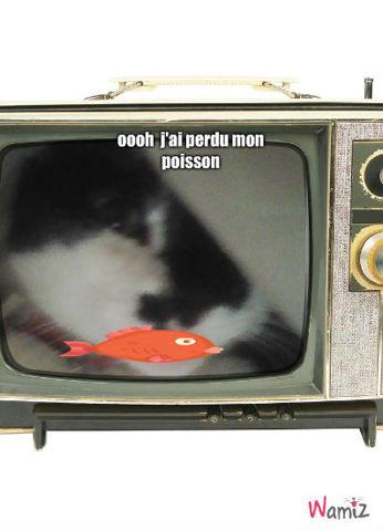 chat mdr, lolcats réalisé sur Wamiz