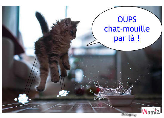 chat-mouille-39439.jpg