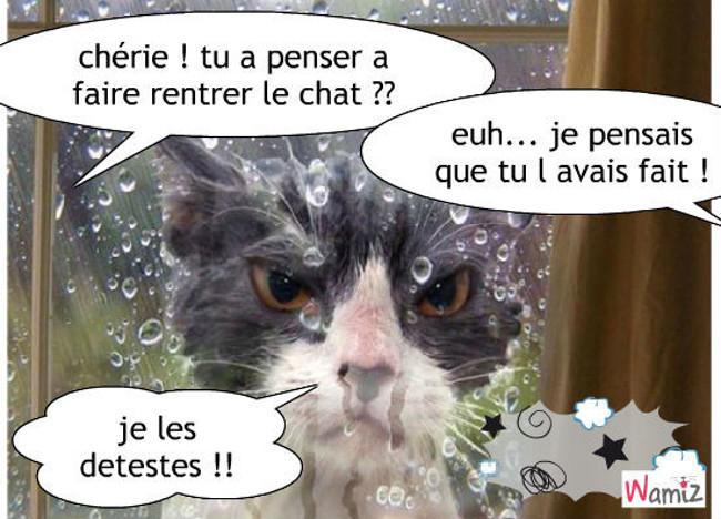 chat mouillé !, lolcats réalisé sur Wamiz