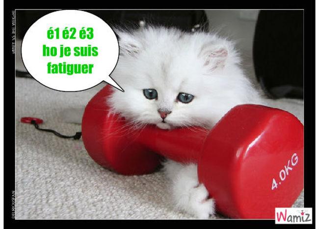 chat muscler, lolcats réalisé sur Wamiz