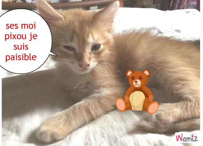 chat paisible, lolcats réalisé sur Wamiz