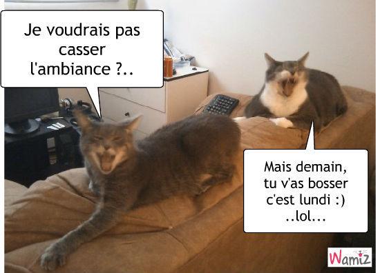 Souvent Chat pas drôle chat :):) : Tooniz lolcats réalisé sur Wamiz TD91