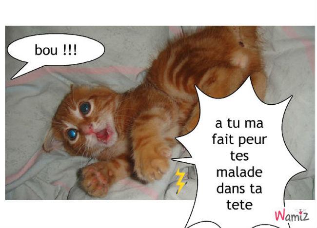 chat peureux, lolcats réalisé sur Wamiz
