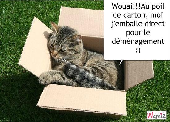Chat pour moi sais fait :), lolcats réalisé sur Wamiz