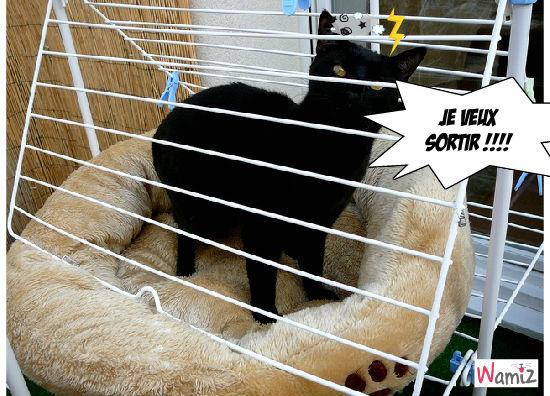 chat prison, lolcats réalisé sur Wamiz