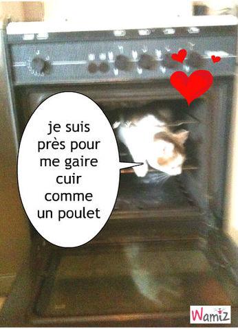 chat qui cuit , lolcats réalisé sur Wamiz