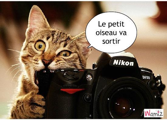 """Résultat de recherche d'images pour """"chat qui prend des photos"""""""