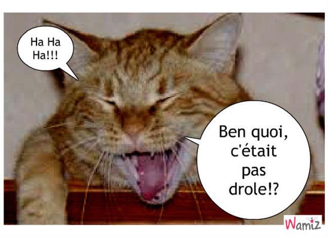 Chat qui rit, chat qui pleure!, lolcats réalisé sur Wamiz