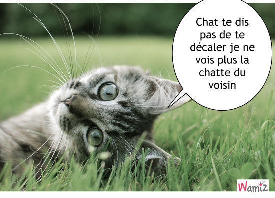 Images et dessins humoristiques - Page 3 Chat-qui-veux-voire-la-chatte-80768