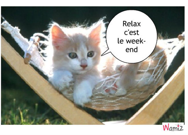 Chat relax c'est le wend-end, lolcats réalisé sur Wamiz