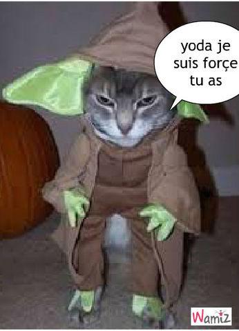 chat star wars , lolcats réalisé sur Wamiz