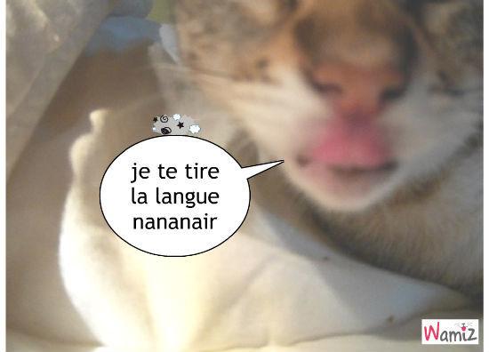 chat tire le langue , lolcats réalisé sur Wamiz