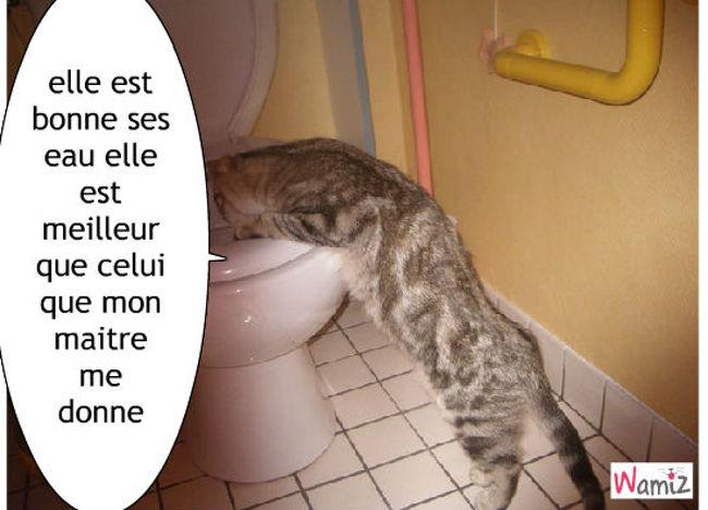 chat toilette, lolcats réalisé sur Wamiz