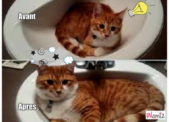 chat trop grand, lolcats réalisé sur Wamiz