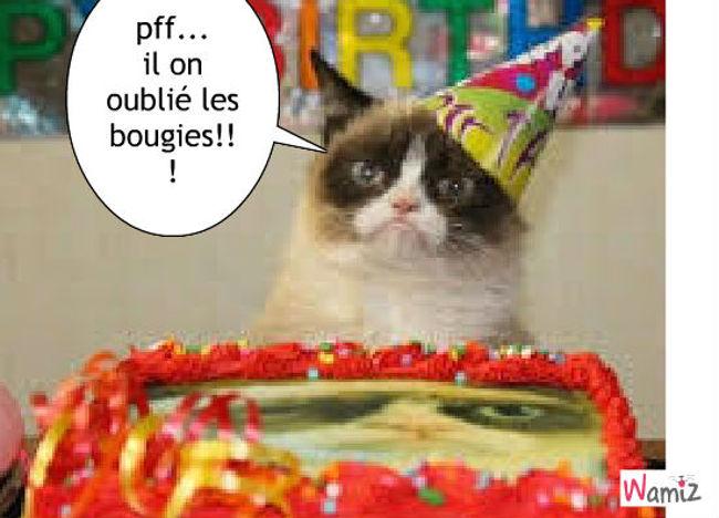chat, un anniversaire?, lolcats réalisé sur Wamiz