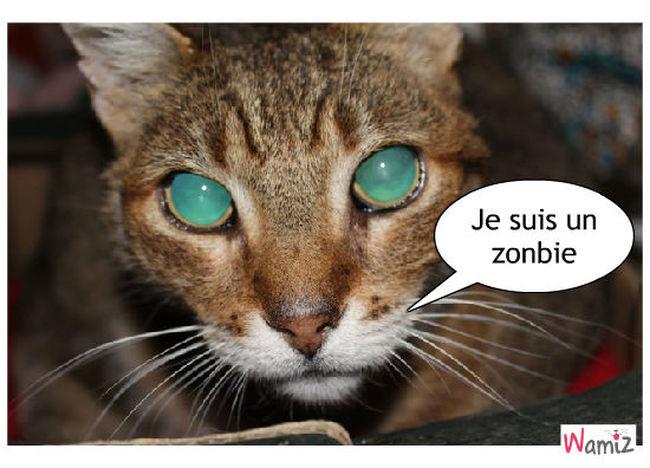 chat zonbie , lolcats réalisé sur Wamiz