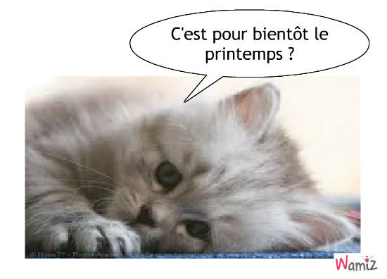 chaton-printemps-43690