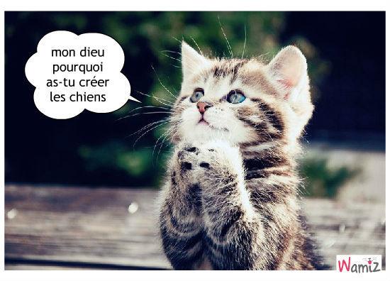 Relativ chaton qui fait une priere : Tooniz lolcats réalisé sur Wamiz XD79