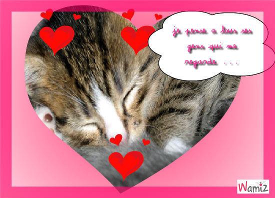 Image de chat trop rigolo image de - Photo de chaton rigolo ...