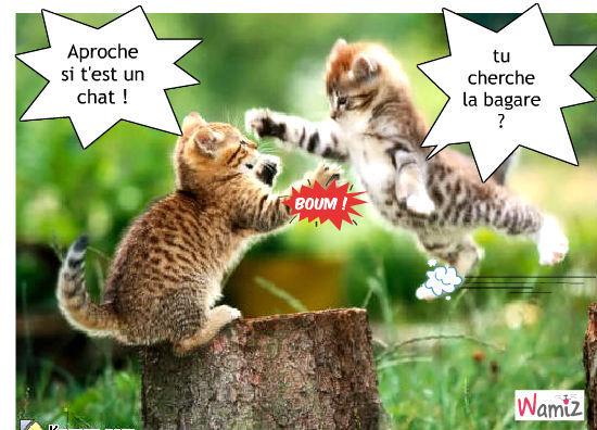 chatons-attaque-40990.jpg