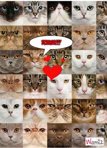 chats...., lolcats réalisé sur Wamiz