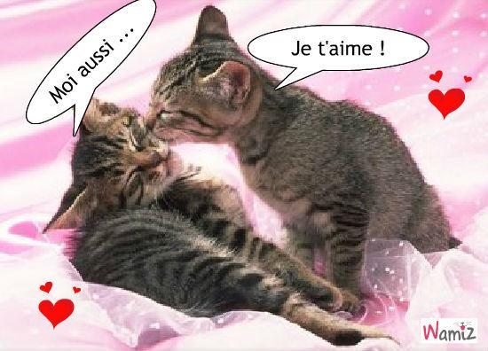 Chats amoureux, lolcats réalisé sur Wamiz