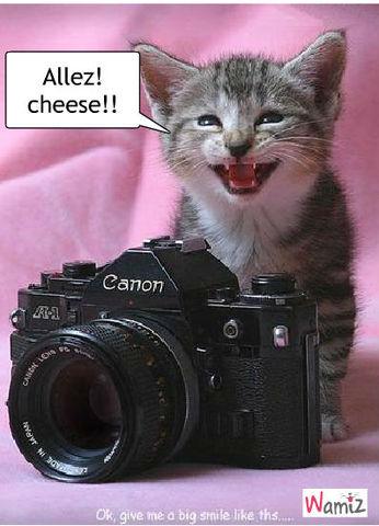 Cheese!, lolcats réalisé sur Wamiz
