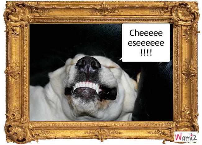 Cheese !!!, lolcats réalisé sur Wamiz