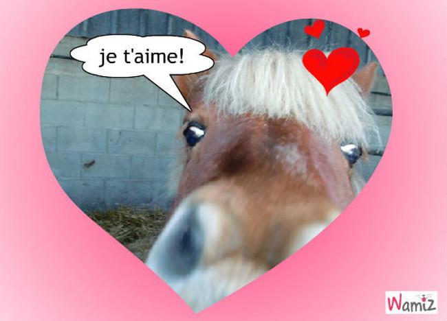cheval amoureux, lolcats réalisé sur Wamiz