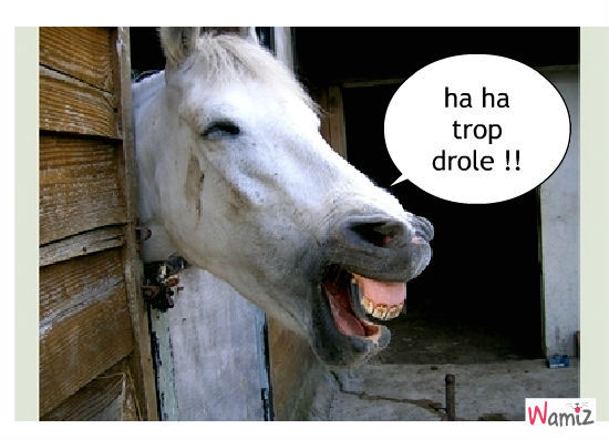image drole cheval