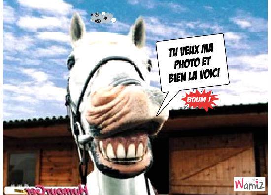 cheval pas content , lolcats réalisé sur Wamiz