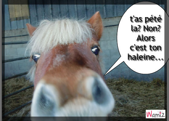 Google image  - Page 4 Cheval-t-as-pete-46166
