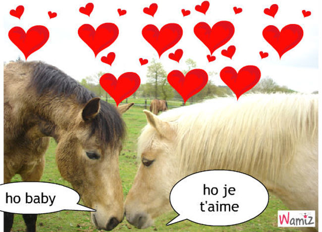 chevaux amoureux , lolcats réalisé sur Wamiz
